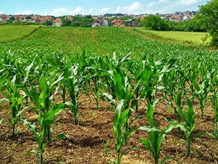 Financement des risques climatiques pour une agriculture durable