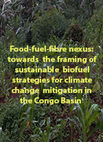 Food-fuel-fibre nexus: towards the framing of sustainable biofuel strategies for climate change mitigation in the Congo Basin